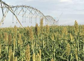 CTASI vai levantar situação da disponibilidade hídrica nas regiões irrigantes do País